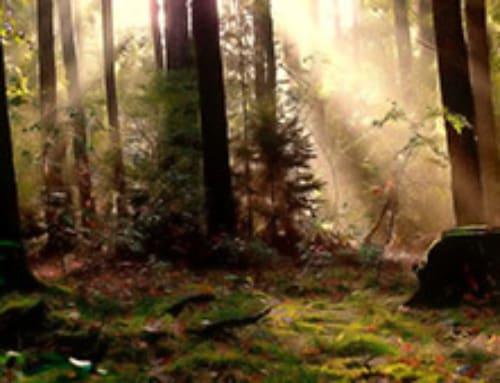 Sylwoterapia (energia drzew)